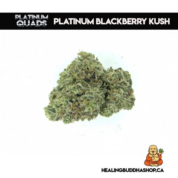 buy platinum blackberry kush strain online healing buddha shop