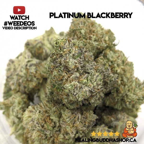 buy platinum blackberry strain online healing buddha shop