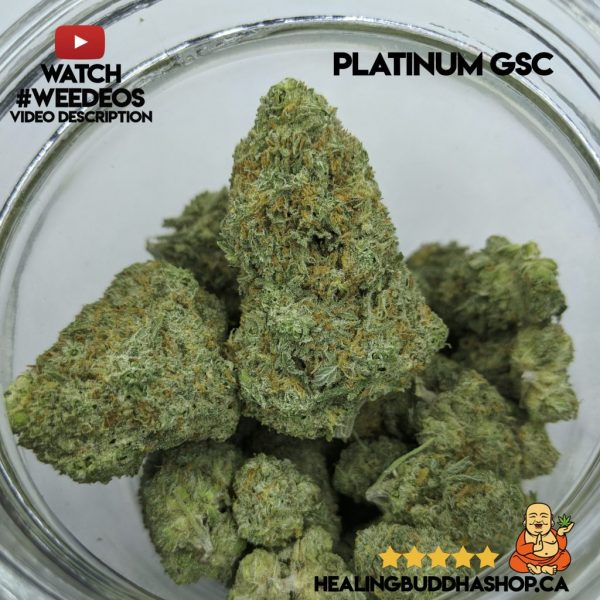 buy platinum girl scout cookies strain online healing buddha shop