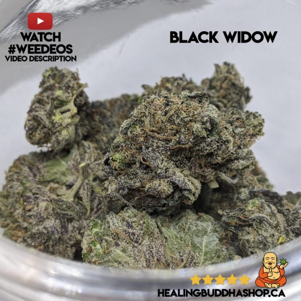 buy black widow strain online healing buddha shop