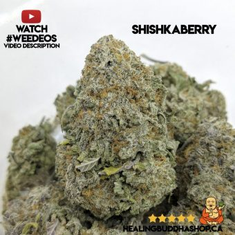 buy Shishkaberry online on healingbuddhashop.ca