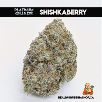 buy Shishkaberry online at healingbuddhashop.ca
