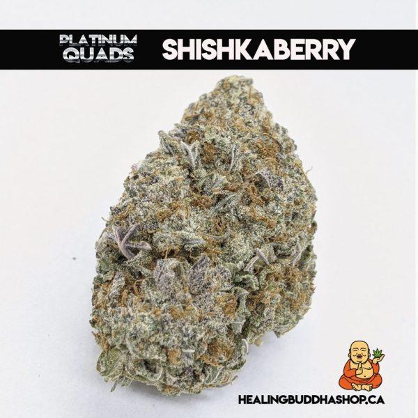 buy Shishkaberry online at healingbuddhashop.ca