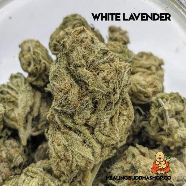 white lavender - healingbuddhashop.ca