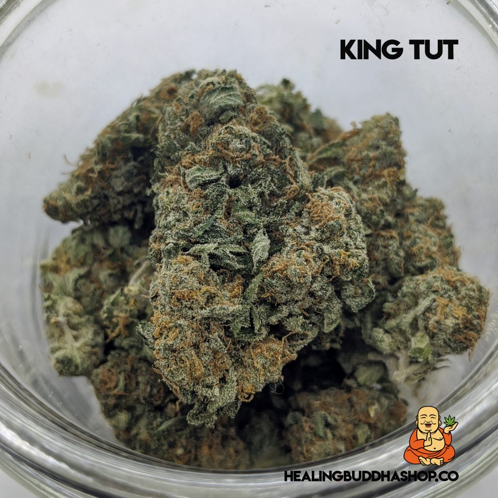 King Tut - healingbuddhashop.co